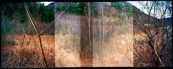 springtrees-vermont-2009