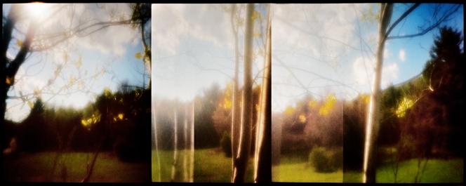 treesatsunsetihiwzoneplatem7800ztest2