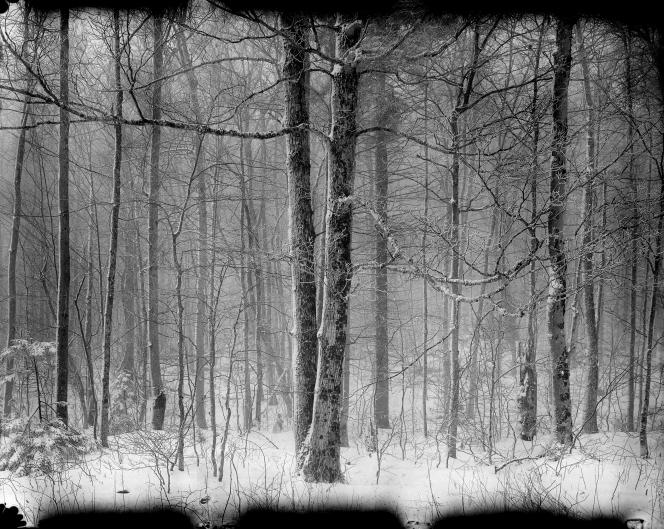 TreesNew55PN
